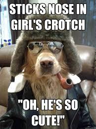 Cute Meme - funny dog memes i top 50 of all time i world wide interweb