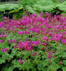 Long Blooming Annual Flowers - 18 best flowering ground cover plants balcony garden web