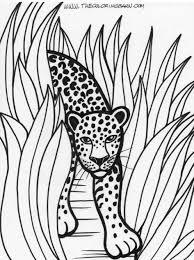 tropical rainforest coloring pages rainforest animals rainforest