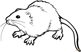 brown rat coloring page free printable coloring pages