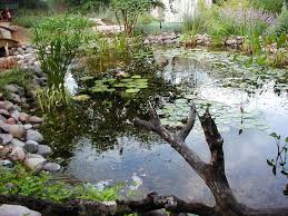 Pictures Of Backyard Ponds by Backyard Ponds Are Truly The Jewel Of The Water Feature Lifestyle
