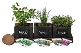 amazon com cedar planter box complete herb garden indoor kit