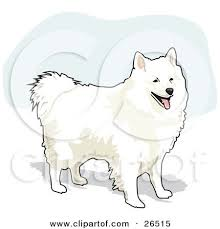 american eskimo dog tattoo clipart illustration of a fluffy and friendly white american
