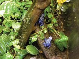 how to build a poison frog terrarium
