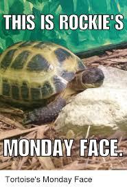 Tortoise Meme - this is rockies monday face mematic net tortoise s monday face