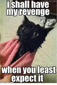 Revenge Memes - 25 best memes about grumpy cat grumpy cat memes