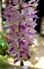 Flower Of Orchid - 1870 best tropical plants u0026 flowers images on pinterest flowers
