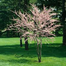 the best flowering trees and shrubs