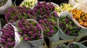 flower gardens springtime flower gardens in april stock video footage videoblocks
