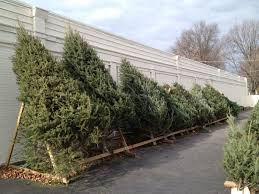 pre cut christmas trees available from boy scouts ballwin mo patch