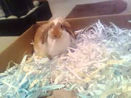 where to shred papers cardboard box shredded paper happy rabbit