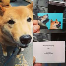 Momo Business Cards Ran Into A Guy On A Conference With A Doge He Handed Me This