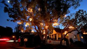 tree chandelier tree is a twinkling in silver lake