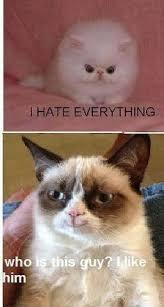 Grumpy Cat Friday Meme - pin by milagro rodriguez on funny pinterest grumpy cat
