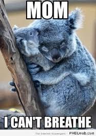 Koala Bear Meme - koalas meme google search koalas pinterest meme animal