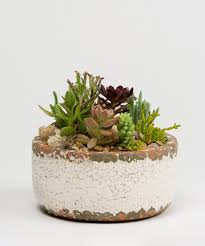 succulent garden delivery philadelphia voted best in philly