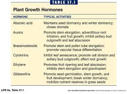 major plant hormones and their functions google search plant