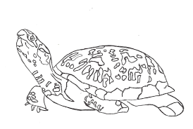turtle coloring page to print turtle colouring pages turtles