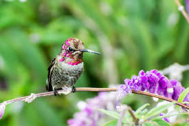 hummingbird flowers top 10 flowers to attract hummingbirds