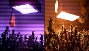 cannabis grow time lapse marijuana time lapse