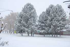 free images landscape tree nature outdoor branch cold sky