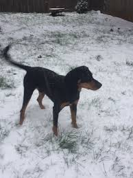 lexus ls in snow photos pups and other animals enjoying nw snow katu