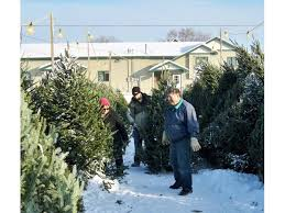christmas tree sales black friday christmas trees go on sale around st michael albertville today