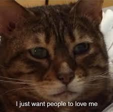Love Me Meme - i just want people to love me cat meme cat planet cat planet
