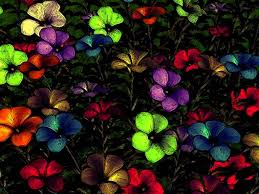 floral pictures hd wallpapers pulse
