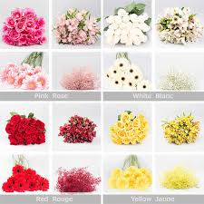 flowers in bulk one colour flower mélange bulk pack 126 stems