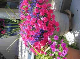Flowering Patio Plants 20 Best Best Container Gardens Potted Plants And Combinations