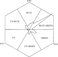 limits to the salience of ultraviolet lessons from colour vision