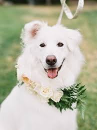 american eskimo dog edmonton edmonton wedding florist virginia rose floral u0026 event design