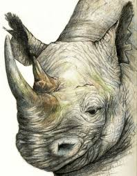 pencil drawings of wild animals pencil drawings of wild animals