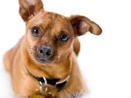 photograph deaf dogs pro petfinder