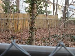 native woodland plants invasive plants you should grow that