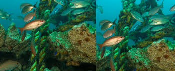 Florida Artificial Reefs Map by Mbara Mexico Beach Artificial Reef Association