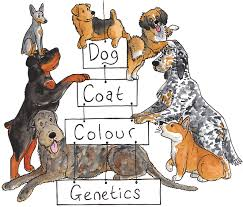 vetgen veterinary genetic services canine list services