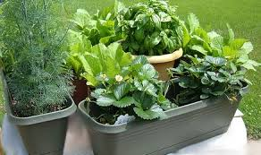 Kitchen Herb Garden Design Garden Design Garden Design With Start Your Own Kitchen Herb