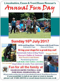 rescue a boxer dog welcome to the lincolnshire essex and trent boxer dog rescue charity