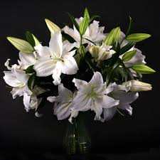 white lilies white lilies lilies tulips