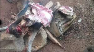 chien cuisiné des chiens volés pour être cuisinés dans les rues de bangui en