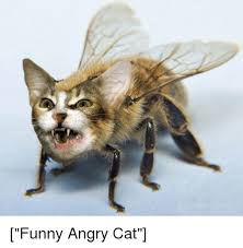 Angry Cat Meme - funny angry cat cats meme on me me