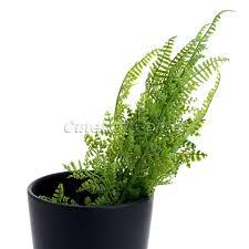 plante verte bureau plante pour bureau meilleur de 1 pcs en plastique faux plante verte