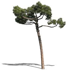 cut out small pine cut out trees and plants vishopper