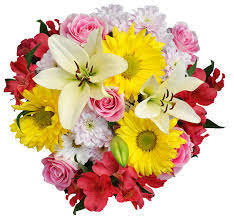 cut flowers cut flowers in mumbai suppliers prices in mumbai maharashtra