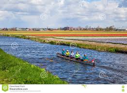 canoe between tulip fields at lisse netherlands editorial image