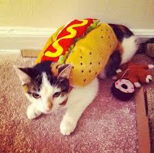 Kitten Halloween Costumes Pet 30 Hilarious Pet Halloween Costumes Huffpost