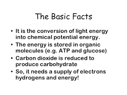 Light Energy Facts Photosynthesis