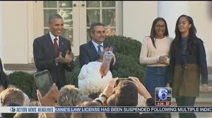 obama pardons thanksgiving turkey president pardons turkey images reverse search